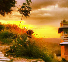 Visit The Rural Outback of Udaipur