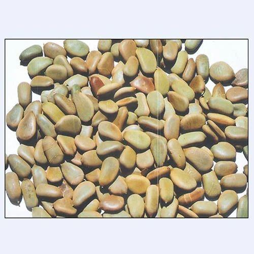 Caesalpinia Seeds