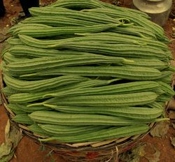 Natural F1 Ridge Gourd Seed - F1 DISHA, Packaging Size: 300gm Tin