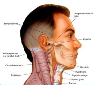 Head & Neck Surgery in Sector 14, Gurgaon | ID: 6346371312