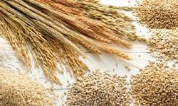 Cereals Testing Services