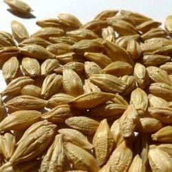 Barley Bran