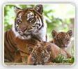 Luxury Golden Triangle Tour With Wildlife