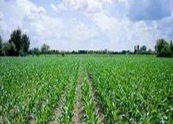 Agri Investment Advisory