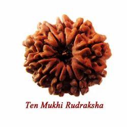 Ten Mukhi Rudraksha