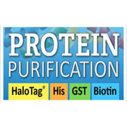 Protein Purification and Interactions