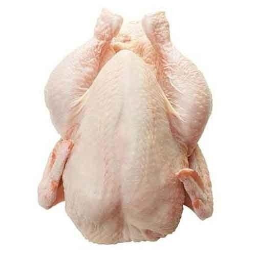 Halal Frozen Whole Chicken - Wholesale Price for Halal Frozen Whole