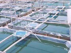 Spirulina Cultivation and Marketing Program Services