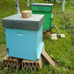 Beehive Boxes Manufacturer From Bengaluru
