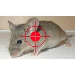 Rodents Elimination Service