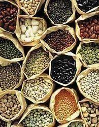 Beau Vegetable Kitchen Garden Seeds