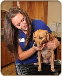Pet Health Exams Service