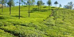 Indian Tea Tree Oil