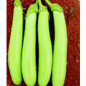 Hybrid Brinjal Green Long Seeds-f1 Harsha, Packaging Type: Pouch Packing, Packaging Size: 5gm & 10gm