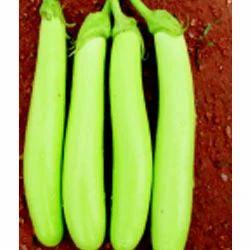 Brinjal Green Long Seeds-F1 Harsha