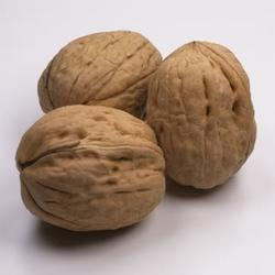 Walnut in Lucknow, अखरोट, लखनऊ - Latest Price