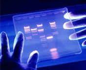 DNA Testing & Sequencing Services (Oligonucleotide)