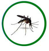 Mosquito Treatment Services