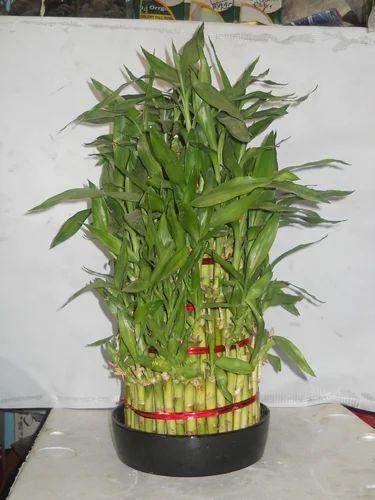Bamboo Garden Planters