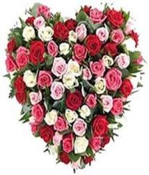 70 Mix Roses