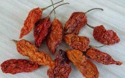 Oven Dried Bhut Jolokia Chilli