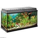 Freshwater Aquarium