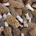 Sponge Mushroom