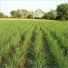 Agriculture Land Services