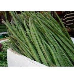 Fresh Moringa Drumstick