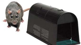 Rat Amp Rodent Control Baiting Chemical Control Service