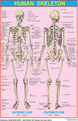 Science charts blood circulation charts manufacturer from delhi ccuart Image collections