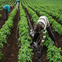 Plantation Solution