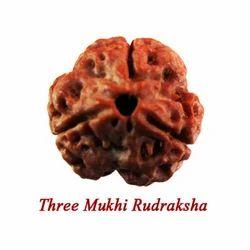 Three Mukhi Rudraksha