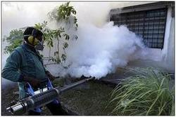 Bed Bugs Fumigation Services