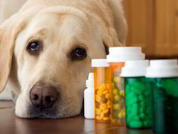 Veterinary Drugs Testing Services