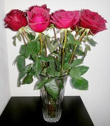 Hybrid Rose