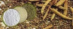 Gaur Seed