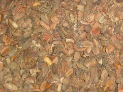 Mahua Seed