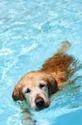Dog Swimming Training