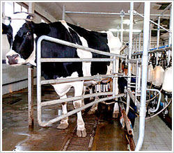 dairy services