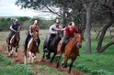 Horse Safari Package Tours