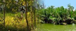 Forest Dooars Wildlife Tours