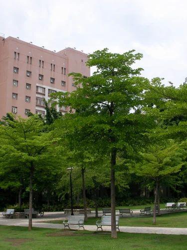 Designer Road Side Tree