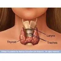 Thyroid Profile ( Thyroid Function Test ) - 3 Tests