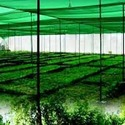 Hdpe Agro Shed Net