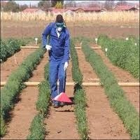 Weed Management Services