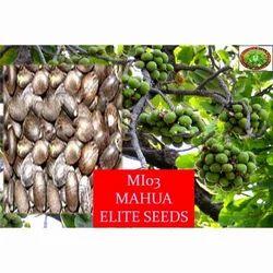 Mahua Elite Seeds