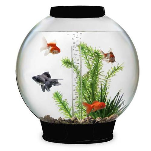 Fish Tanks In Lucknow À¤®à¤›à¤² À¤• À¤Ÿ À¤• À¤²à¤–नऊ Latest Price Mandi Rates From Dealers In Lucknow