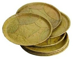 Eco Friendly Disposable Plates  sc 1 st  IndiaMART : eco friendly disposable plates - pezcame.com