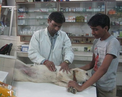 Supervision Of Experienced Veterinary Service